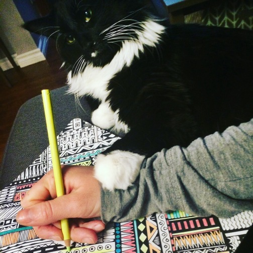 colouring_cat