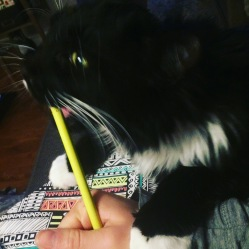 pencil_crayon_cat
